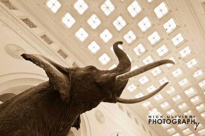 Field Museum of Natural History, photo credit Nick Ulivieri