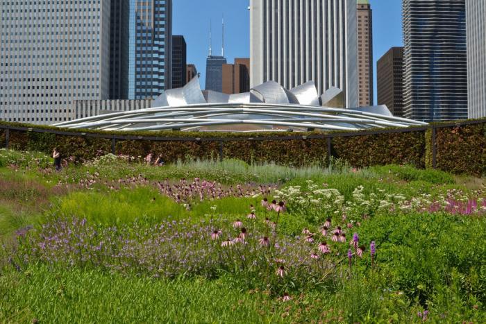 Lurie Garden at Millennium Park, photo credit Center for Neighborhood Technology
