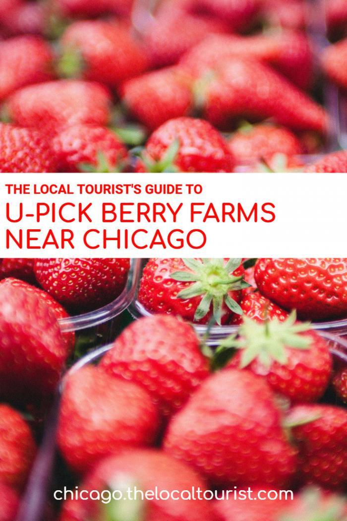 Chicago U-pick Berry Farms