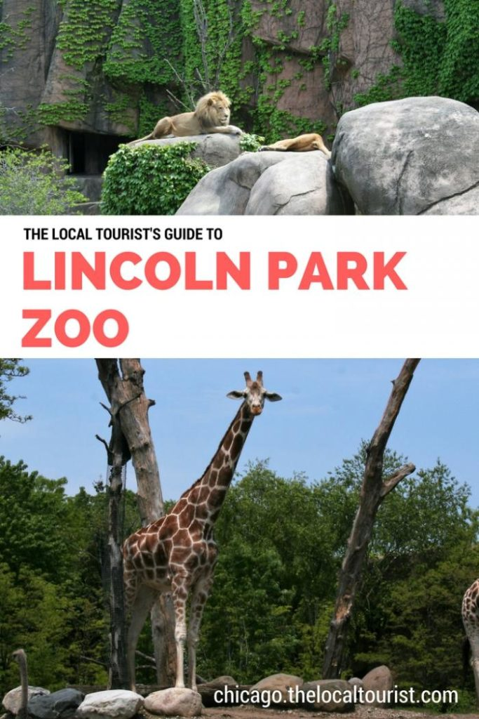The Local Tourist's Guide to Lincoln Park Zoo