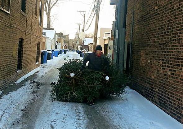 Chicago Christmas Tree Recycling