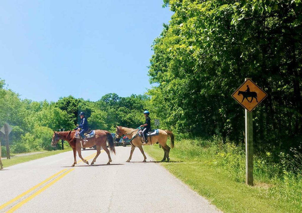 Horses crossing the road at Chain o' Lakes State Park, one of the places you can go horseback riding in Chicago.