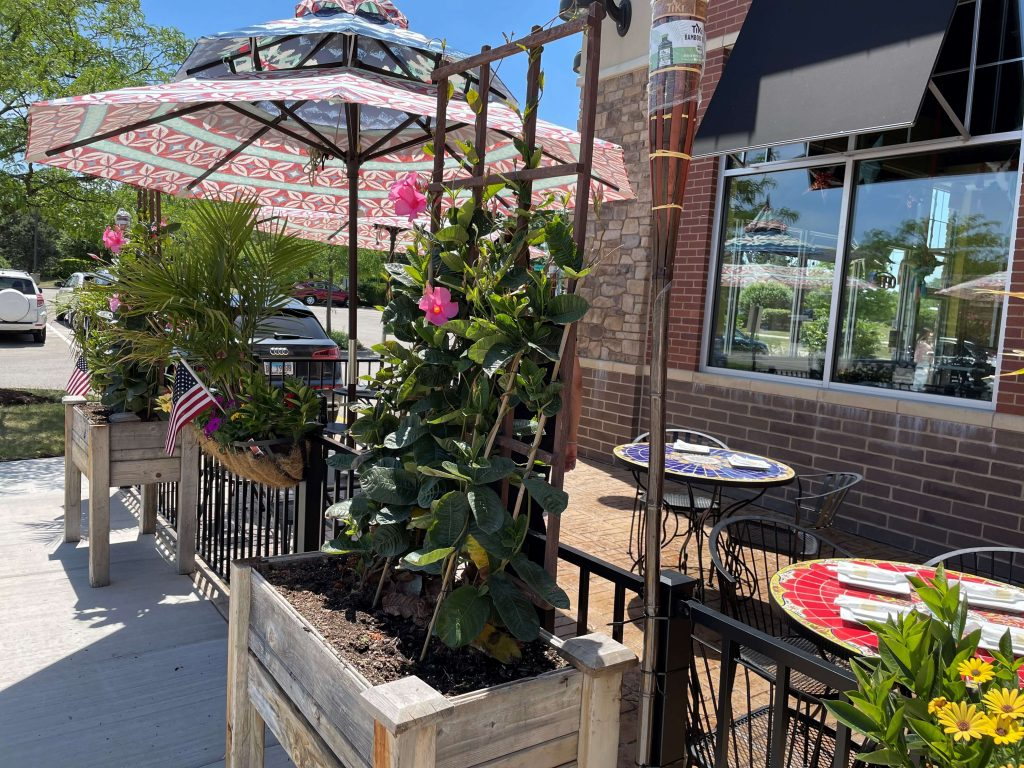 Tacos Guanajuato serves up impressive Mexican street fare in a casual yet classy style 1